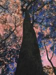 Looking up by Kate-ColourTheory