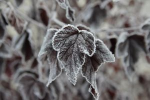 Frost . by iDeathNee