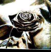 Charcoal Rose by CTravis