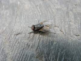 Dead fly by showmeyourway