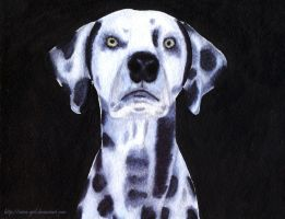 Dalmatian. by VeIra-girl