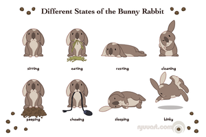 different states of the bunny rabbit by alienfirst