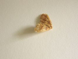 197.  Moth by mynti-stock
