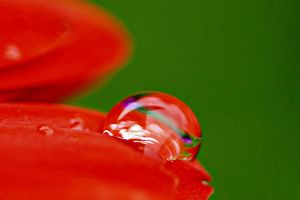 Water Droplet On Flower3 by a6-k