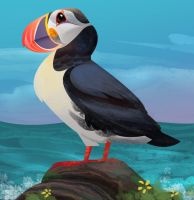 Puffin by banhatin