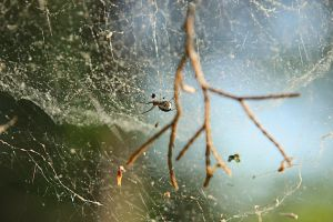 Spider's World by Ffex