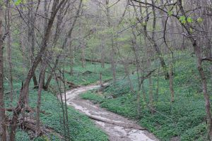 Along the Creekbed by geiersphotos