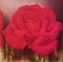 red rose by Vingo-12