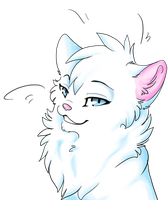 white cat by Rhass