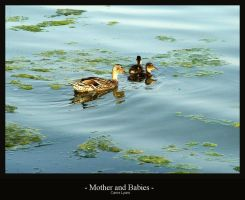 Mother and Babies by carriephlyons