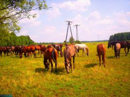 Herd of horses by MannyDiax