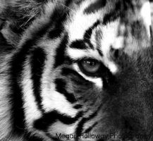 Eye of the Tiger by Meggs255