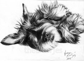 Dog Commission 2 by jucyjesy82