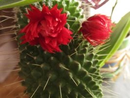 Cactus2 by Nightowl103