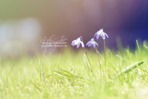 FLOWERS IN THE SUN by LyddeLiLyddiS