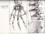 Skeletal Crop Study Thumbnails (1 and 2 of 3) by GrumpyDragon