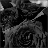 Black roses by jpfagerhe