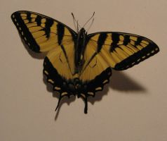 Butterfly 2 by markopolio-stock