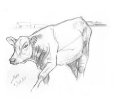 Daily Sketch: Cow Study 021815 by JRMurray76