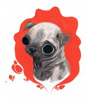 A Pug Dog by vitaminBee