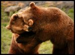 Grizzly Bear Fight Club by NaturePunk