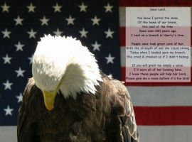An Eagle's Prayer by NixSeraph
