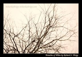Branches of White by richardxthripp