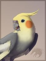 Cockatiel by Gul-reth