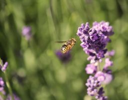 Flight of the Bumblebee by petits-bonheurs