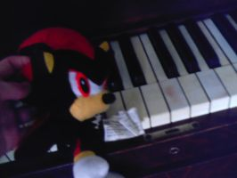 Shadow about to play piano by megan-the-Speeddemon