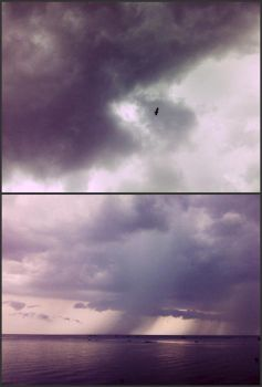 black bird and storm clouds by kliss