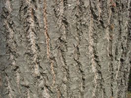 treetrunk002 by cma-stock