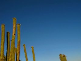 Cacti to the Sky by skinsvideos21