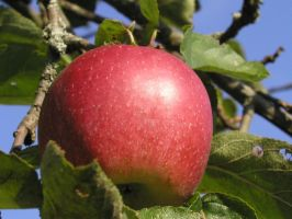 apple by kumArts