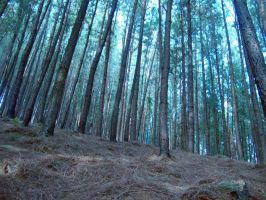 In the pine forest by praveen3d