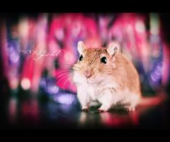 midnight gerbil by hyouro