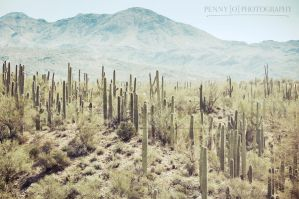 Cactus Forest by PenelopeT