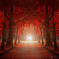Let me in by ildiko-neer
