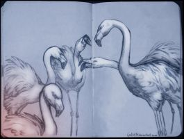 Flamingos furious by lyoth737