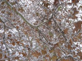 Winter branches by horsea9