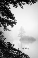 foggy morning by KonradJanicki
