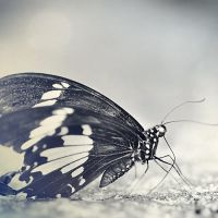 brokenfly by mohdfikree
