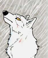 Wolf's Rain Contest--Tell Me What the Rain Knows by NamelessOkami