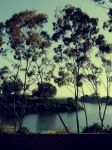 Lake into the Ocean At UCSB. by kaleighispimp
