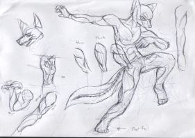 Folf anatomy study by kovat