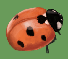 Ladybird by Steph1254