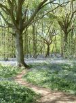 Bluebell Wood 1 by RB-Photos