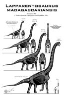 Lapparentosaurus madagascariensis skeletal by Paleo-King