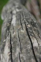 Wood texture, Stock by Prinzess-Stock