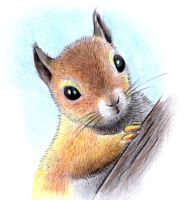 Squirrel by don234a